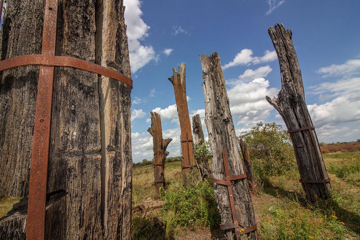 Woodhenge Millingerwaard